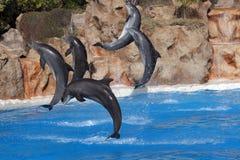 скакать дельфинов воздуха Стоковые Изображения