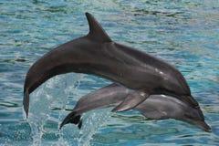 скакать дельфинов смычка стоковое изображение rf