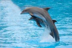 скакать дельфинов Стоковая Фотография