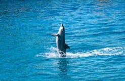 Скакать дельфина надводный Стоковое Изображение