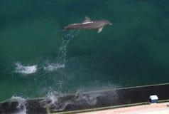 Скакать дельфина Стоковое Изображение RF
