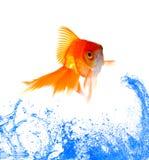 скакать золота рыб Стоковое Фото