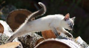 Скакать котенка Стоковое Изображение RF