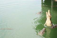 Скакать крокодила Стоковое Изображение