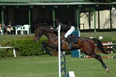 скакать лошади Стоковые Изображения RF