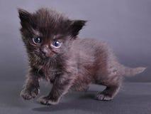 Скакать малого черного котенка идя и бежать Стоковое Изображение