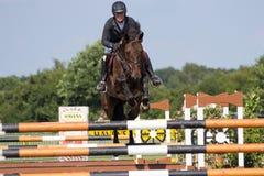 Скакать лошади Стоковое Фото
