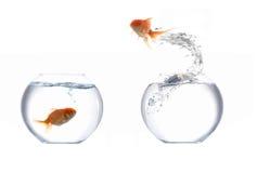 скакать рыб золотистый Стоковые Изображения RF