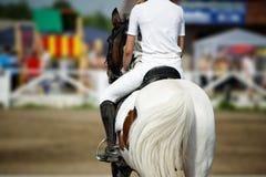 скаковая лошадь Стоковая Фотография RF