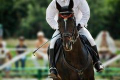 скаковая лошадь Стоковые Изображения RF