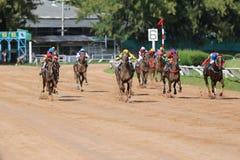 Скаковая лошадь и жокей в скачках Стоковые Изображения RF