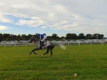 Скаковая лошадь и жокей Стоковые Изображения RF