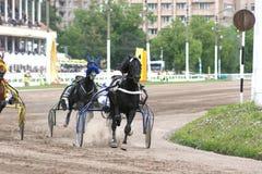 Скаковая лошадь обузданная к тележке Стоковые Фото