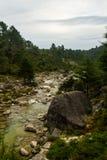 Скалистое река вдоль леса стоковое изображение rf
