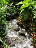 Скалистый поток исчезая в джунгли стоковые фото