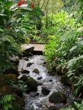 Скалистый поток через сочную тропическую установку стоковые фото