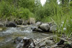 Скалистый пропуская поток леса стоковое изображение
