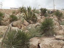 Скалистый сад кактуса Стоковые Изображения
