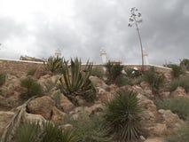 Скалистый сад кактуса Стоковая Фотография RF