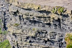 Скалы Moher, фото горной породы, графство Клара детали, Ирландия Стоковое фото RF