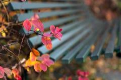 Скамейка в парке в осени Стоковые Изображения RF