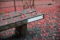 Скамейка в парке в осени Стоковые Изображения