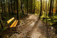 Скамейка в парке в древесинах Стоковые Фото
