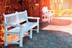 Скамейка в парке города Стоковое Изображение