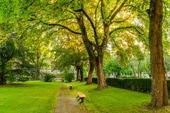 Скамейка в парке под высокими деревьями Стоковая Фотография RF
