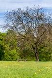 Скамейка в парке под деревом на луге, весне Стоковые Фотографии RF