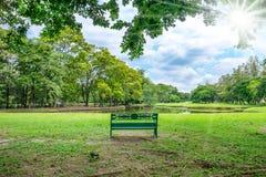 Скамейка в парке под деревом около озера стоковая фотография rf