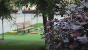 Скамейка в парке в свете утра Сиротливый стенд в лесе весной Bench в парке Сиротливая деревянная скамья, парк Стоковое Изображение RF