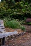 Скамейки в парке врозь но совместно Стоковые Изображения