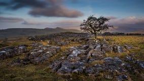 Скамья уединённого дерева вышеуказанная в участках земли Йоркшира Стоковые Изображения RF