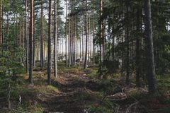 Скандинавский coniferous лес в осени стоковая фотография rf