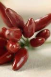 скатерть 4 горячих перцев Стоковая Фотография