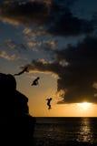 скача вода захода солнца Стоковые Фото