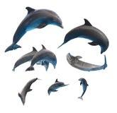 Скача дельфины на белизне Стоковое Изображение