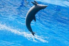Скача дельфин в Испании Стоковая Фотография RF