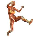скача женщина мышцы Стоковые Изображения RF