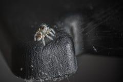 Скача конец паука вверх Стоковая Фотография RF