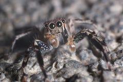 Скача макрос паука Стоковое Изображение RF