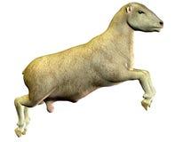 скача овцы Стоковое фото RF