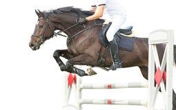Скача лошадь Стоковые Фото