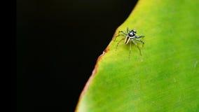 Скача паук над зелеными лист Стоковое фото RF