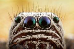 Скача портрет паука Стоковые Изображения RF