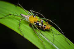 Скача подавать паука Стоковое фото RF