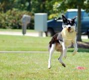 Скача собака стоковое фото rf