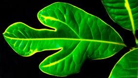 Скачками форменные листья Стоковая Фотография RF