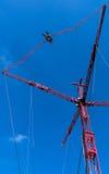 Скачка Bungee Стоковая Фотография